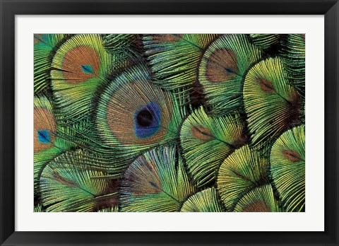 Framed Peacock Feather Design Print