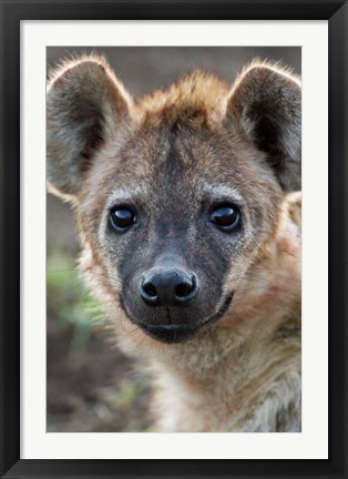 Framed Young Spotted Hyena, Tanzania Print