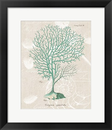 Framed Gorgonia Granulata on Linen Sea Foam Print