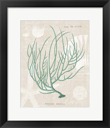 Framed Gorgonia Miniacea on Linen Sea Foam Print