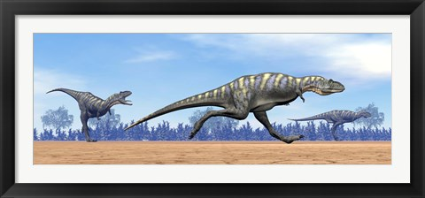 Framed Three Aucasaurus dinosaurs running in the desert Print
