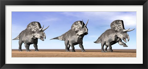 Framed Three Zuniceratops standing in the desert Print