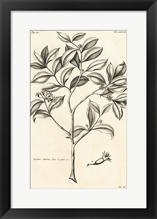 Framed Tropical Leaf Study I Print