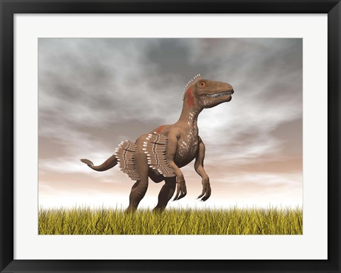 Framed Velociraptor dinosaur standing in the yellow grass Print