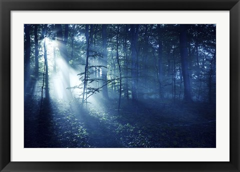 Framed Beam of light in a dark forest, Liselund Slotspark, Denmark Print