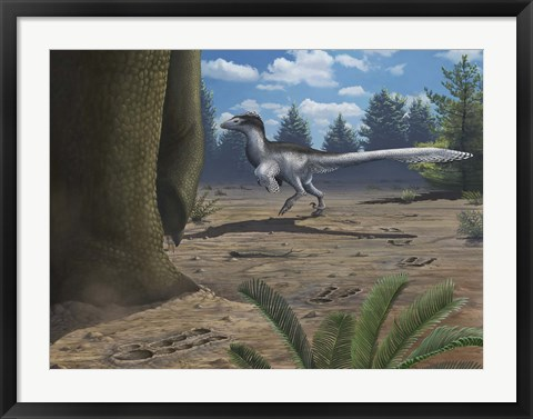 Framed deinonychosaur leaves tracks across a Cretaceous China landscape Print