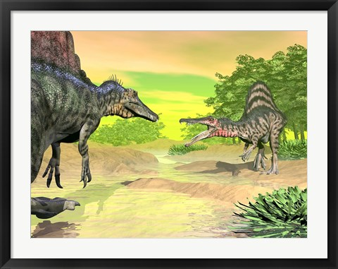 Framed Confrontation between two Spinosaurus dinosaurs Print