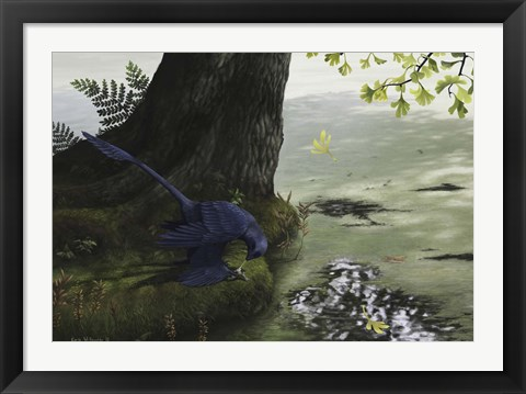 Framed Microraptor gui eating a small fish Print