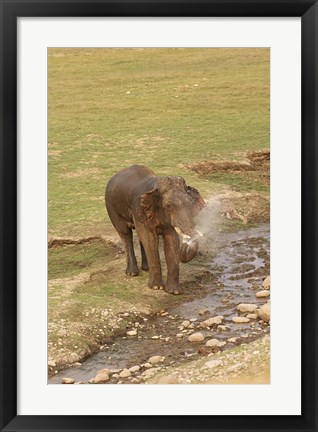 Framed Elephant at waterhole, Corbett NP, Uttaranchal, India Print