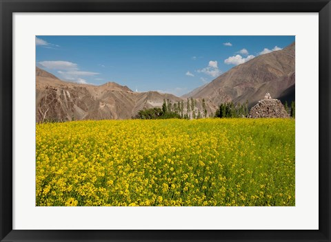 Framed Mustard flowers and mountains in Alchi, Ladakh, India Print