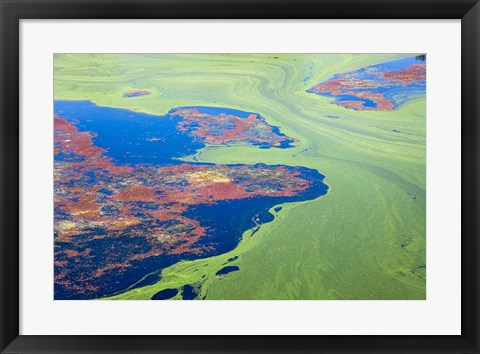 Framed Algae on the water, Indhar Lake, Udaipur, Rajasthan, India Print