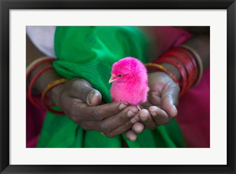 Framed Woman and Chick Painted with Holy Color, Orissa, India Print