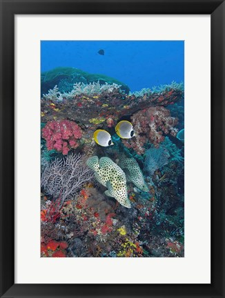 Framed Scene of fish and coral Print