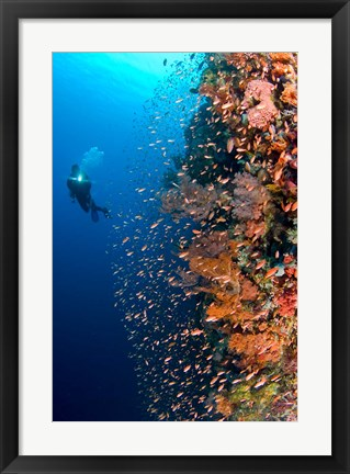 Framed Diver with light next to vertical reef formation, Pantar Island, Indonesia Print