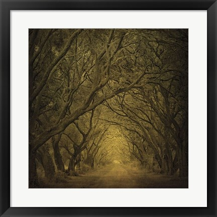 Framed Evergreen Oak Alley (vertical view) Print