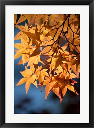 Framed Autumn maples on grounds of Hiroshima Castle, Japan Print
