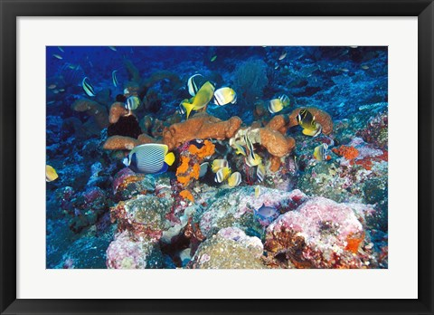 Framed Coral Reefs, Papua, Indonesia Print