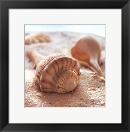 Framed Beachy Shell III Print