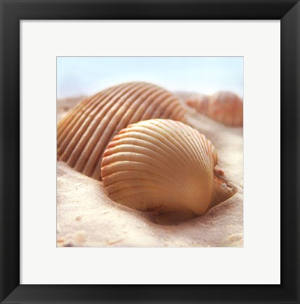 Framed Beachy Shell I Print
