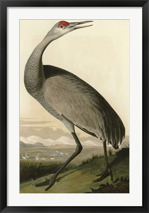Framed Hooping Crane Print