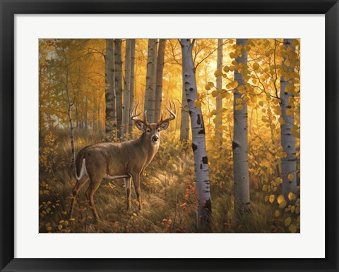 Framed Whitetail in Aspens Print