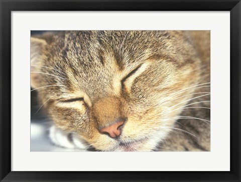 Framed Cat Sleeping Print