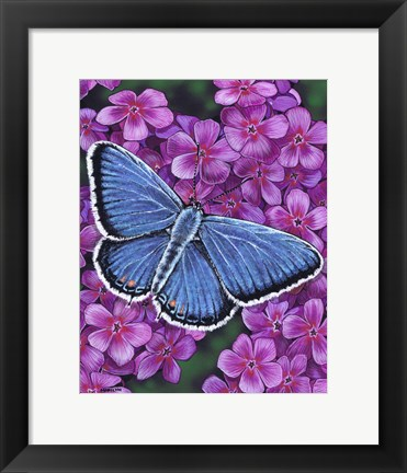 Framed Eastern Tailed Blue Butterfly Print