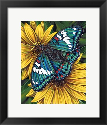 Framed Gaudy Baron Butterfly Print