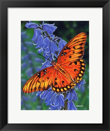 Framed Brilliant Eye Jewel Butterfly Print