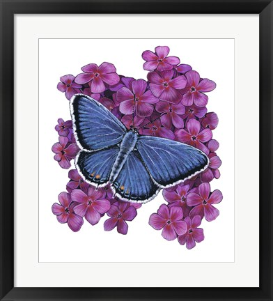 Framed Eastern Tailed Blue Butterfly-II Print