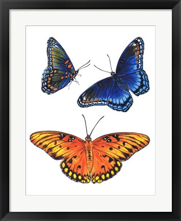 Framed Red Spotted Purple And Brilliant Eye Jewel Butterflies Print