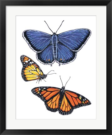 Framed Eastern Blue & Monarch Butterfly Print