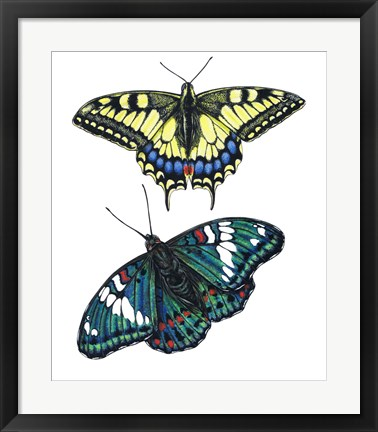 Framed Yellow Swallow Tail and Gaudy Baron Butterflies Print