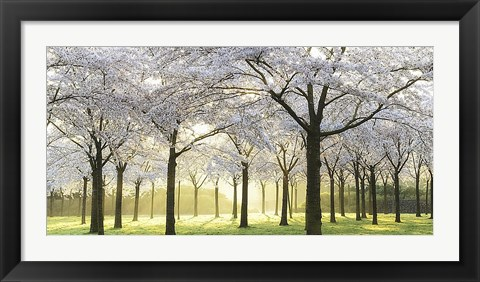 Framed Bridal Trees Print