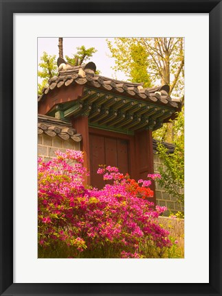 Framed Azaleas, The Deoksugung Palace Complex, Seoul, South Korea Print