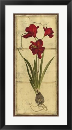 Framed Amaryllis Panel II Print