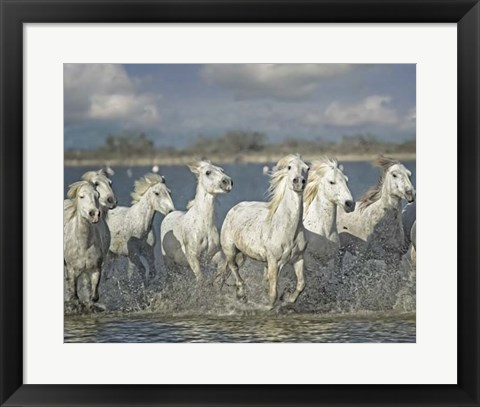 Framed White Horses of the Camargue Print
