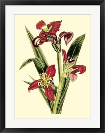 Framed Royal Botanical Study II Print