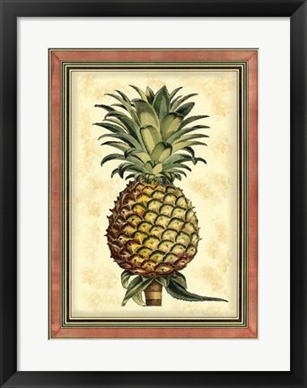 Framed Pineapple Splendor II Print