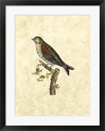Framed Selby Birds VI Print