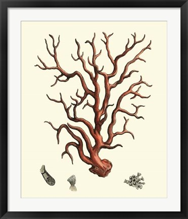 Framed Red Coral I Print