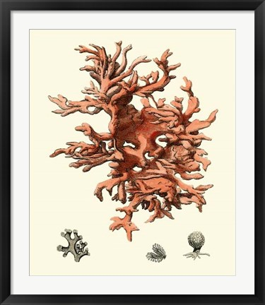 Framed Red Coral III Print