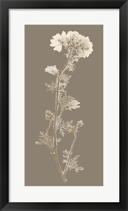 Framed Taupe Nature Study I Print
