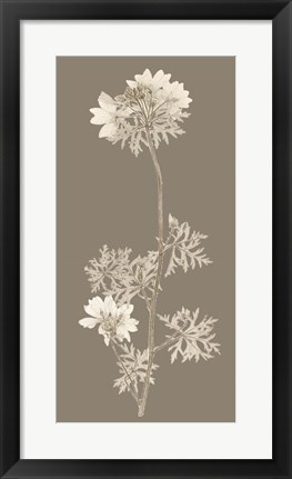 Framed Taupe Nature Study II Print