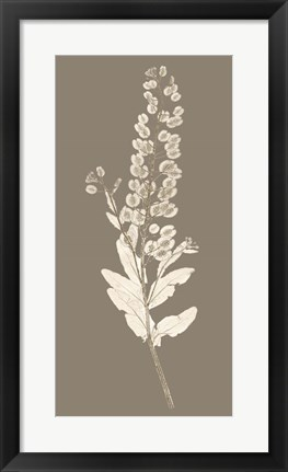 Framed Taupe Nature Study III Print