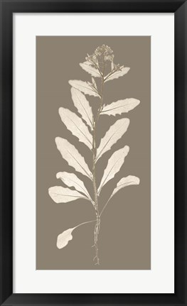 Framed Taupe Nature Study IV Print