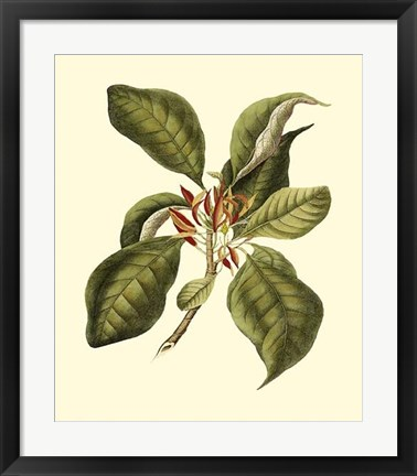 Framed Magnificent Foliage III Print