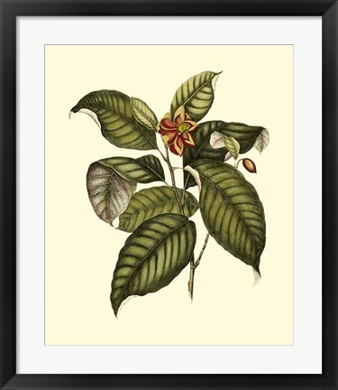 Framed Magnificent Foliage IV Print