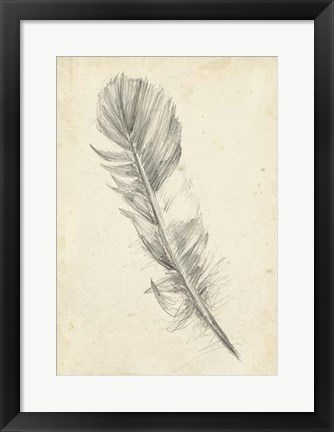 Framed Feather Sketch I Print