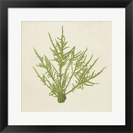 Framed Chromatic Seaweed VII Print